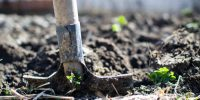 Green is the new black: Five ways to put sustainability on your menu