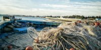 Fish Trap: How poor labelling undermines efforts to make fisheries sustainable