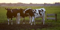 Ontario offers additional $50M in support to farmers