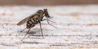 Three steps to avoiding washroom pests