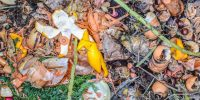 Love Food Hate Waste Canada launches food waste prevention campaign