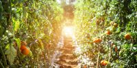 Organic food sales climb by record amount in 2020