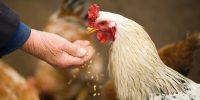 Food companies ranked in Canada Animal Welfare Scorecard